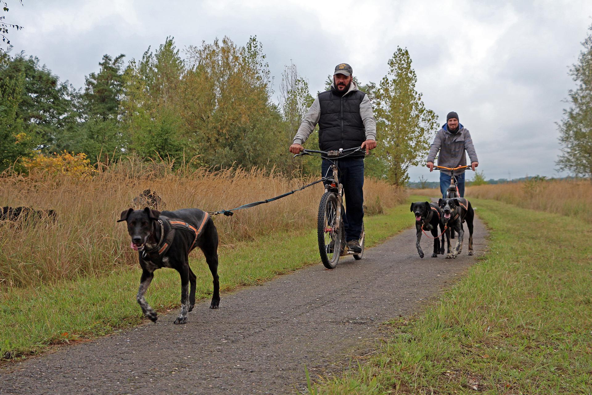 Klettergurt Für Hunde : Touren preise u2013 dogscooter leipzig