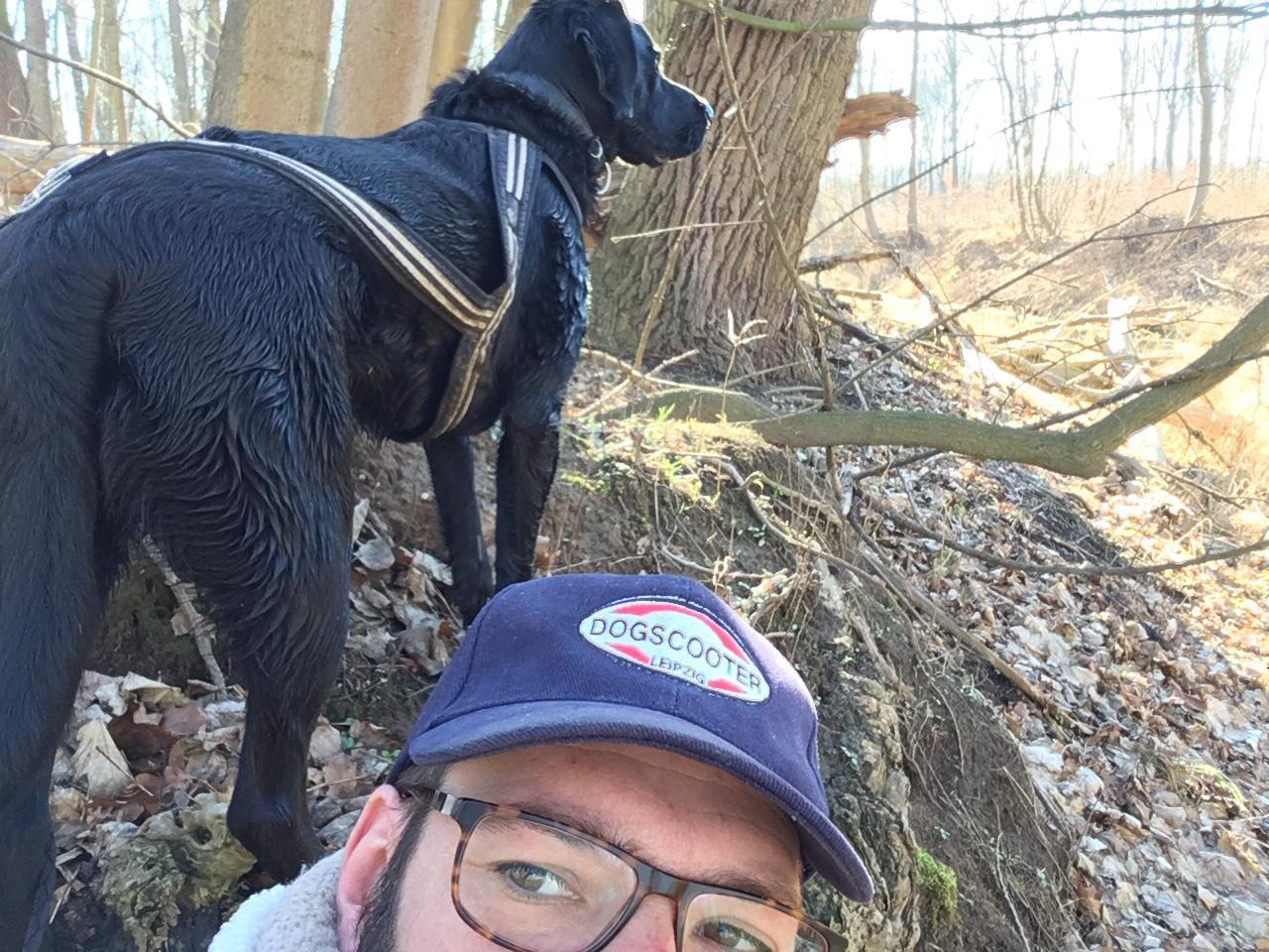 Dogscootern ideal für lauffreudige Hunde!